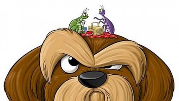Ectoparasitas mais comuns em cães e gatos