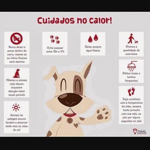 cuidados no calor com seu pet