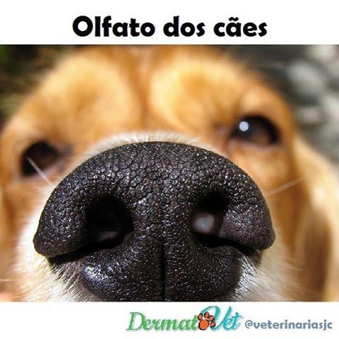 Vejam como funciona o olfato dos cães