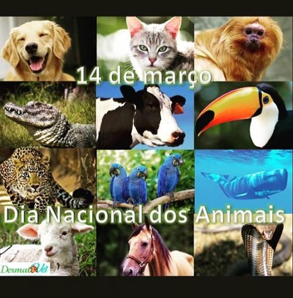 Dia 14 Março (Dia Mundial dos animais)