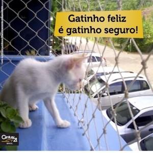 foto dermatovet gato protegido
