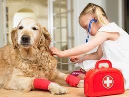 Cuidados básicos que vão ajudar a cuidar melhor de seu animal