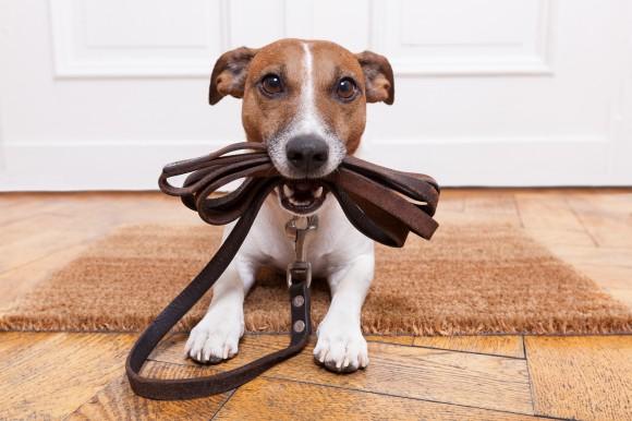 Primeiro passeio de seu cão- 10 dicas importantes