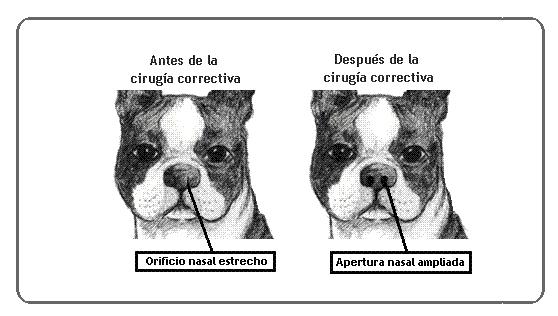 Síndrome Respiratória do cão braquicefálico