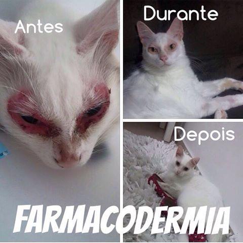 CASO CLÍNICO Diego (felino, SRD, 3 anos) Farmacodermia: doença reativa