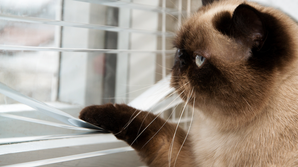 gato paraquedista
