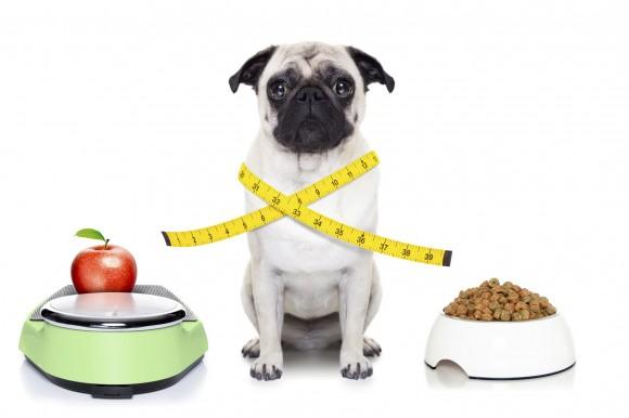obesidade em caes e gatos