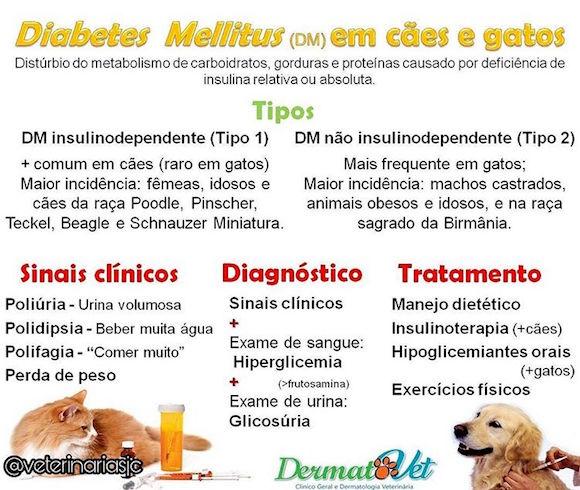 diabetes em caes e gatos dermatovet