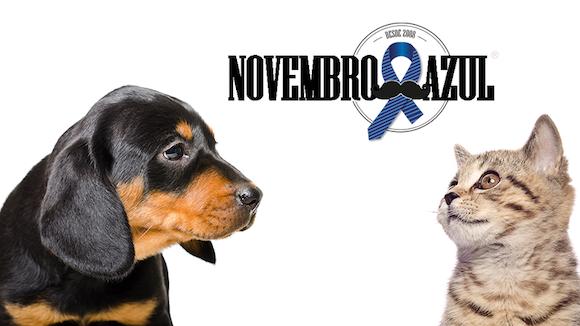 Câncer de próstata em cães e gatos – Novembro Azul