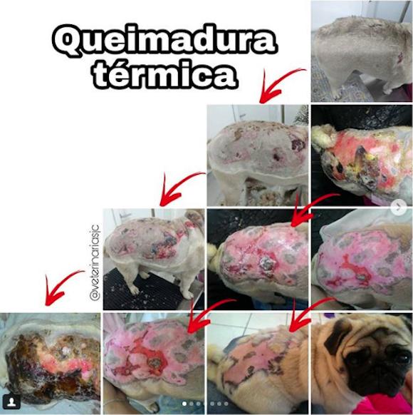 Caso Queimadura Térmica (Dra Mariana Tebaldi – Dermatovet SJC)